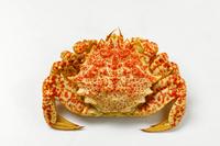 写真 Boiled crab crab(5549840)