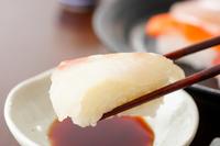 イラスト Sushi Snapper(5588420)