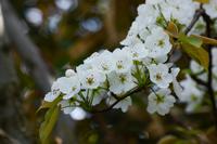 写真 Yamanashi's flower(5588668)