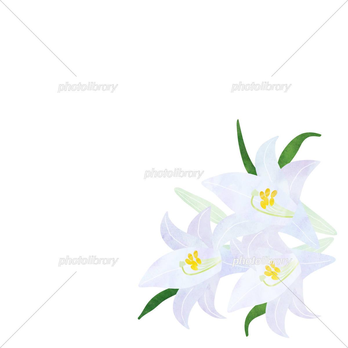 ユリの花 イラスト素材 5661994 フォトライブラリー Photolibrary