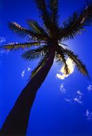 Coconut palms Stock photo [11612] Coconut
