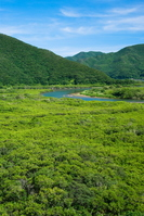 Mangrove virgin forest Stock photo [295885] Kagoshima