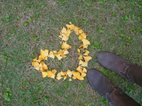 Heart-shaped ginkgo and boots Stock photo [339992] Hart