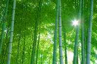 Bamboo forest Stock photo [340236] Of