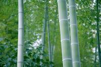 Bamboo Stock photo [341322] Bamboo
