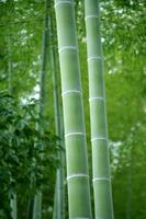 Bamboo Stock photo [341327] Bamboo