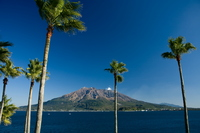 Below trees and Sakurajima Stock photo [409813] Kagoshima