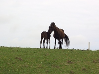 Parent-child horse Stock photo [411971] Horse