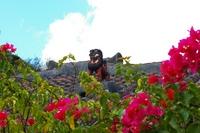 花とシーサー