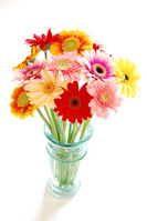 Gerbera Stock photo [465969] Gerbera