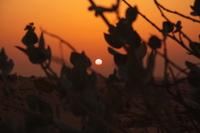 Sunset desert Stock photo [517603] Sunset