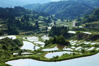 Niigata star Pass of rice terraces Stock photo [554507] Star