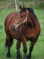 Horse Stock photo [556958] Horse