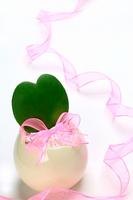 Heart-shaped cactus Stock photo [609361] Cactus