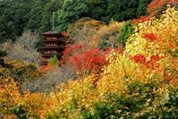 Autumn-five-storied pagoda and autumn leaves of Hase-dera Temple Stock photo [611907] Hase