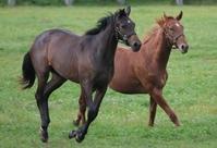 Horse Stock photo [613424] Hokkaido