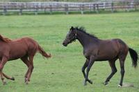 Horse Stock photo [613429] Hokkaido