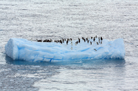 Antarctic pack ice and penguins Stock photo [679419] Antarctic