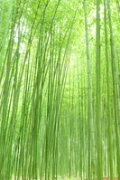 Bamboo forest Stock photo [679440] Bamboo