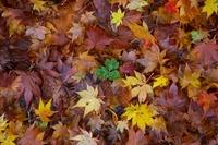 落ち葉と青葉
