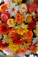 Orange color system gerbera and roses bouquet Stock photo [688652] Gerbera