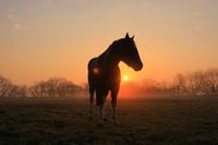 Horse ranch Stock photo [763777] Morning