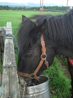 Horse ranch Stock photo [765751] Horse
