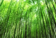 Sagano of bamboo forest Stock photo [767429] Bamboo