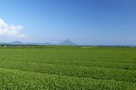 Kaimondake Metropolitan Chiran your tea plantation Stock photo [770182] Tea