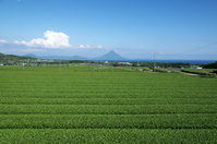 Kaimondake Metropolitan Chiran your tea plantation Stock photo [770197] Tea