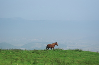 Aso horse Stock photo [771346] Horse