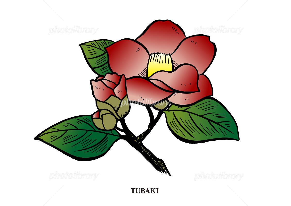 椿の花 イラスト素材 854617 フォトライブラリー Photolibrary