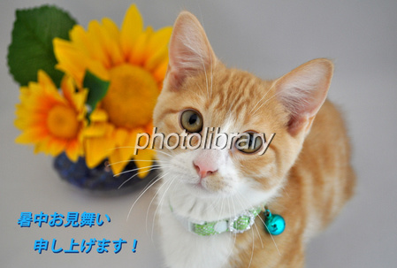 ���渫�� �Ҥޤ���ǭ-stock photo