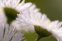 Chrysanthemum Stock photo [848004] Chrysanthemum