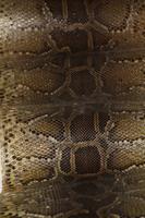 Python Stock photo [848055] Python