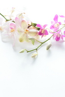 Orchid tropical image Stock photo [853256] Den