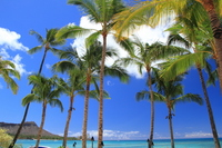 Tree of blue sky and the beach and palm Stock photo [856111] Beach