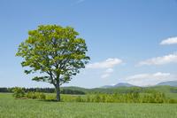 Big tree of prairie Stock photo [856790] Ohki