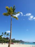 Palm tree Stock photo [857008] Palm