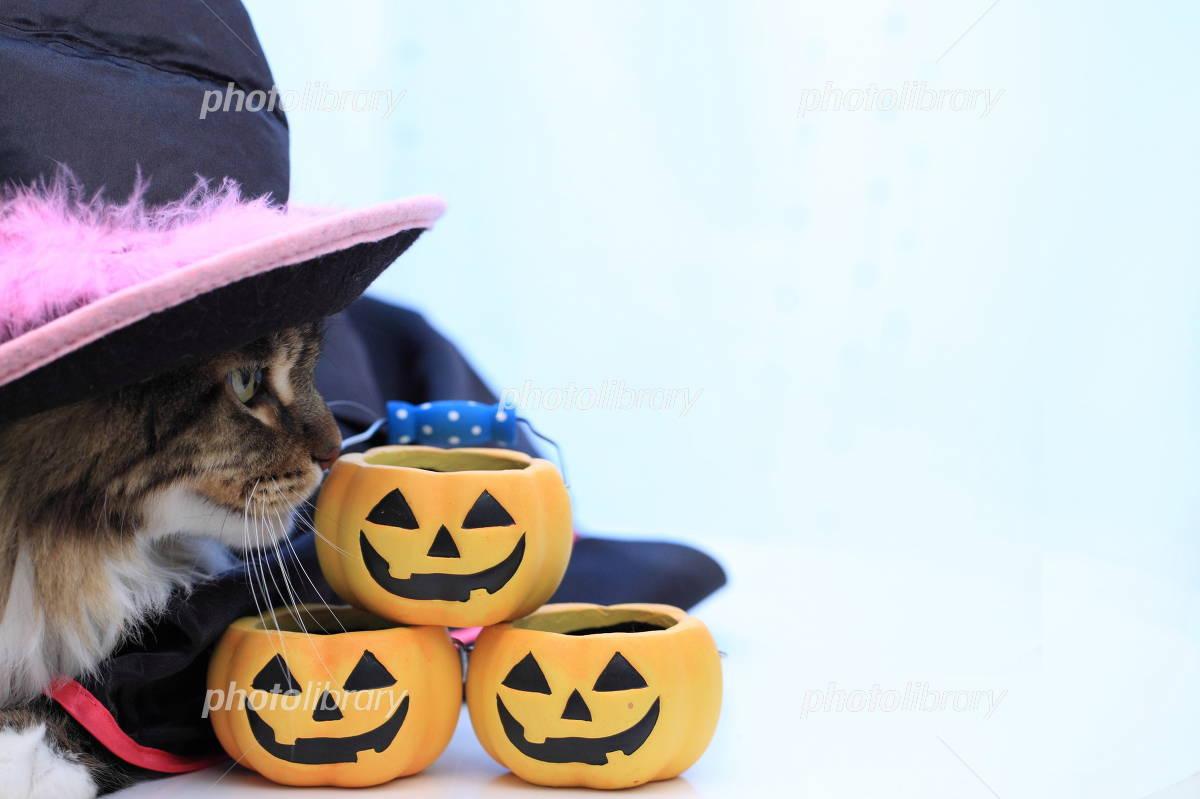 Halloween cat Photo