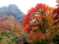 Autumn of depth Yabakei glance Hakkei with autumn leaves Stock photo [924555] Depth