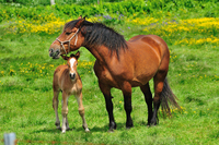 Parent-child of your horse Stock photo [926008] Horse