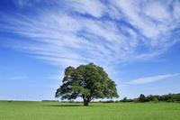 Tree of spring elm Stock photo [929125] Japanese