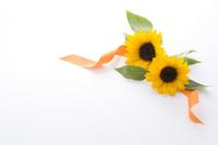 Sunflower Stock photo [929146] Sunflower