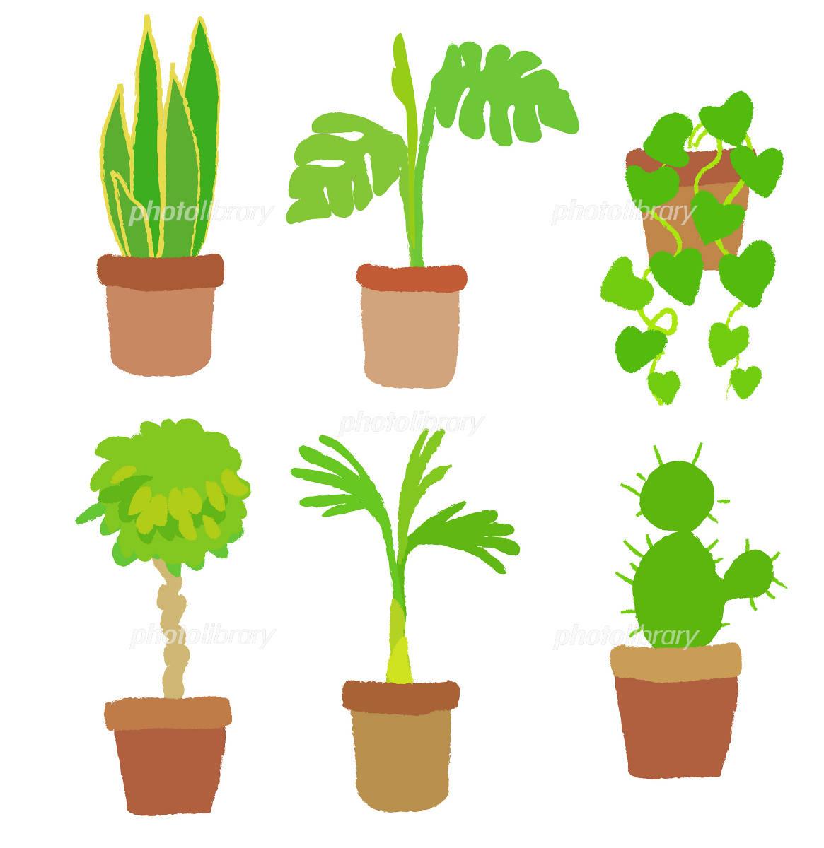 観葉植物 イラスト素材 1036829 フォトライブラリー Photolibrary