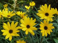 Willow bus sunflower Stock photo [1026830] Yanagiba