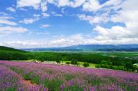 Early summer of Hokkaido Stock photo [1029590] Hokkaido