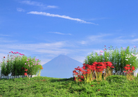 Amaryllis and Fuji and autumn sky Stock photo [1030001] Mt.