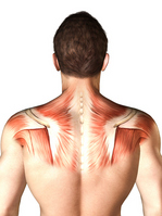 Body image [1030346] Human