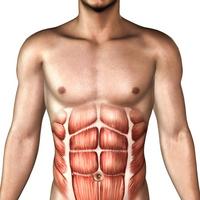 Body image [1030772] Human